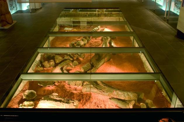 Visita GRATUITA al Museo Paleontológico (Dinosaurios) de Alpuente: 24 de Octubre