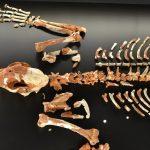 El esqueleto más completo de un Leopardo prehistórico (en España) se encuentra en Valencia