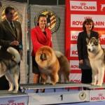 Programación 68ª Exposición Nacional y 36ª Exposición Internacional Canina Valencia