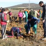 Actividades GRATUITAS en la Comunidad Valenciana para celebrar el Día del Árbol