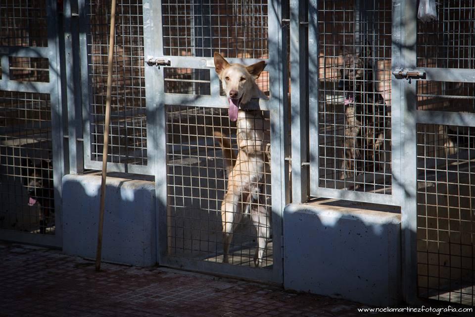 La protectora Modepran impugna el polémico concurso del refugio de animales de Valencia
