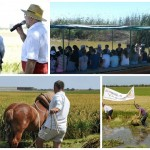 La Fiesta de la Siega del Arroz llenará Catarroja de actividades el domingo 25 de septiembre