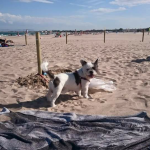 La playa canina de Pinedo vuelve a estar disponible a partir del 15 de junio