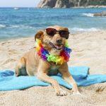 Playas para perros en la Comunidad Valenciana 2017