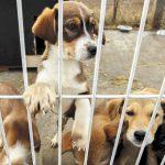 Valencia lanza una nueva campaña para fomentar la adopción de animales abandonados