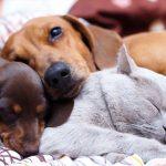 """La Ley para que los animales dejen de ser """"cosas"""" está cada vez más cerca"""