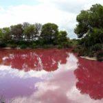 El Raco de l´Olla: el rincón especial para conocer el Parc Natural de l'Albufera