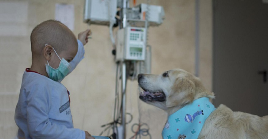 Can de la Mano: mascotas que alivian la vida de enfermos del Hospital de La Fe