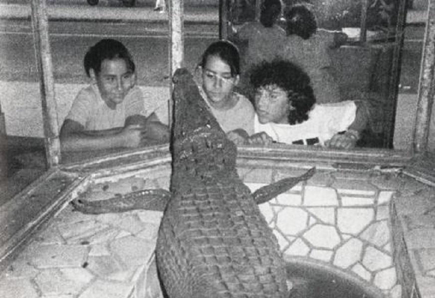 El cocodrilo de Casa Fos