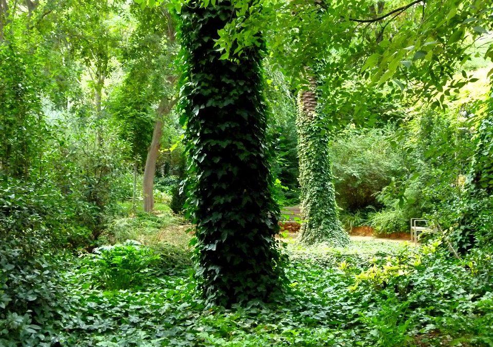 L'Hort de Trenor: el jardín histórico de Torrent