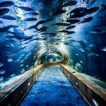 ¿Sabías que el acuario y el delfinario más grande de Europa están en Valencia?