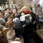 La calle Sagunto de Valencia celebrará San Antonio Abad sin el típico Porrat de Sant Antoni