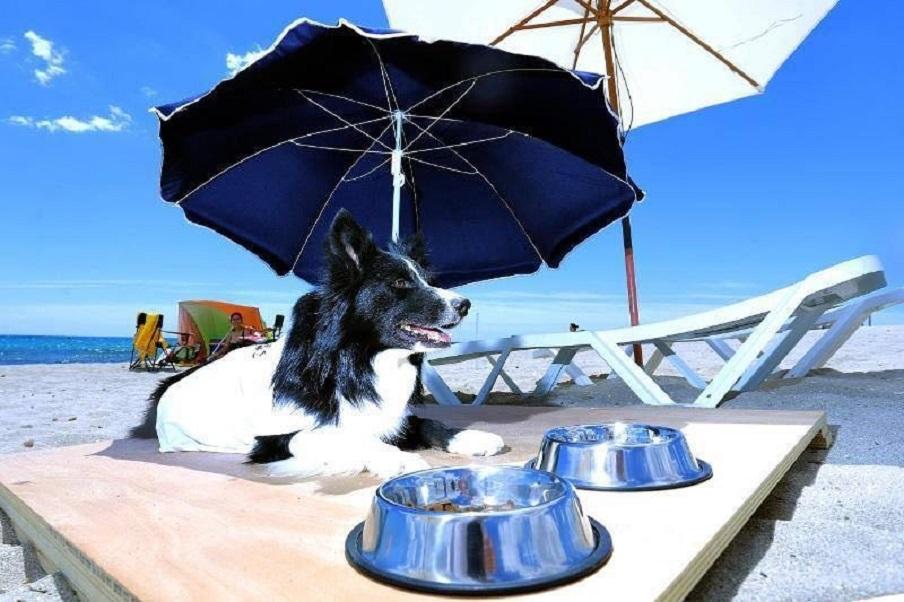 La playa canina de Agua Amarga, una doggy beach adaptada para perros única en Europa