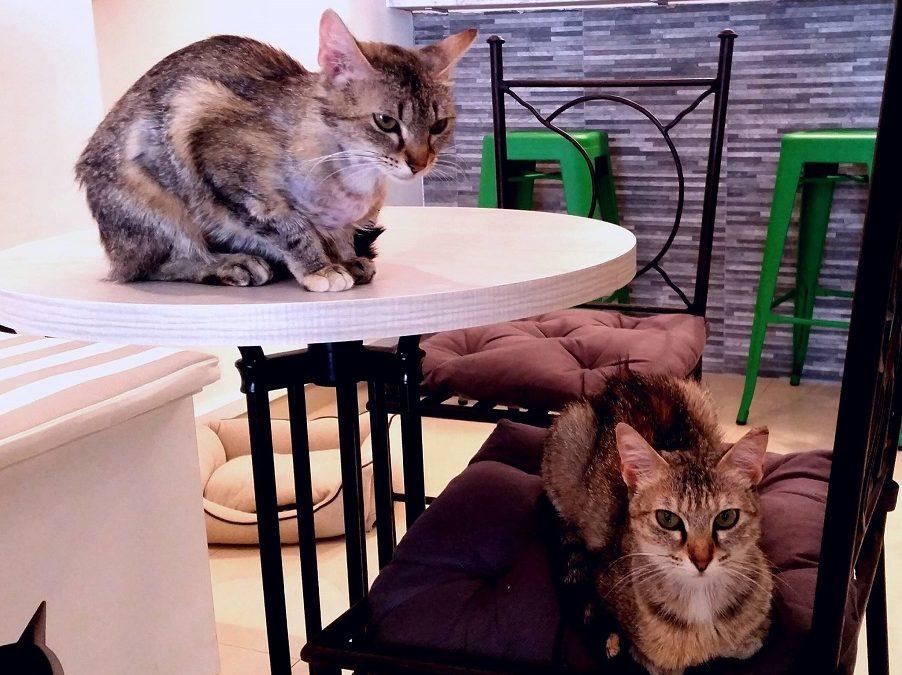 El Passatge dels Gats, el primer Cat Café en Valencia
