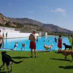 Los perros también tienen vacaciones: piscinas para perros en la Comunidad Valenciana