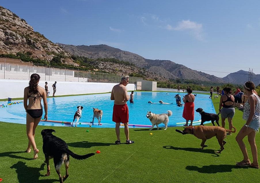 Imagen de la piscina del resort canino de Castellón, Resort Gos Castellón.