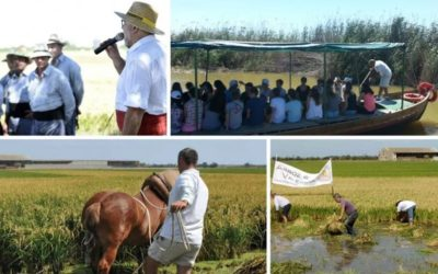 La gran fiesta de la Siega del arroz llega al Puerto de Catarroja