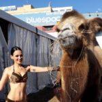 La Comunidad Valenciana prohíbe los circos con animales desde hoy