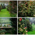 Valencia acoge un bosque de camelias regado con vinos gallegos