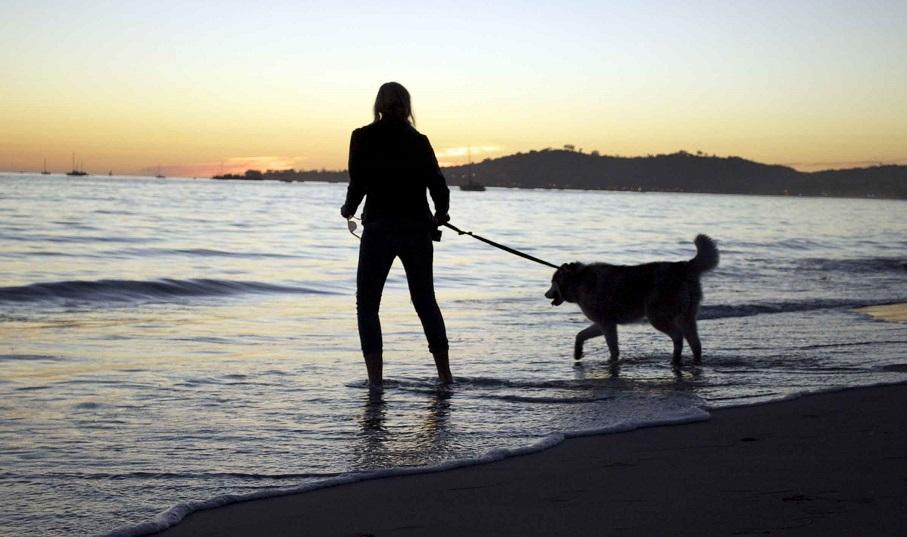 La playa para perros de Pinedo abre sus puertas para una nueva temporada de baño