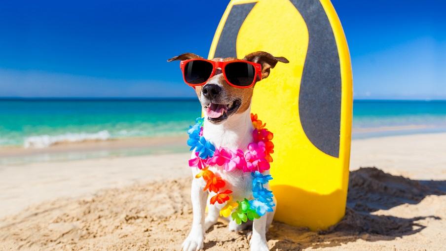 Playas para perros en la Comunidad Valenciana en 2019