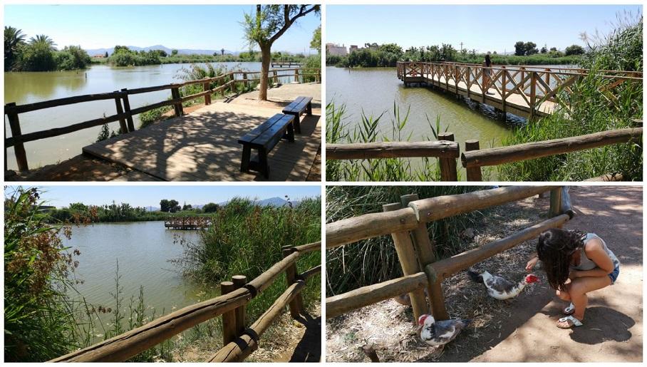El Estany de Nules, un pequeño paraíso para las aves junto al mar
