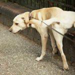 Valencia multará a los propietarios de mascotas que no limpien la orina de su perro