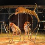 El circo con animales regresa a Valencia