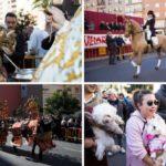 La tradicional fiesta de San Antonio Abad y la bendición de animales vuelve a la calle Sagunto de Valencia