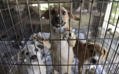 Valencia contará con un nuevo refugio de animales nueve veces más grande que el de Benimàmet