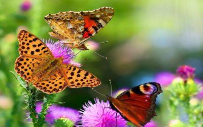 Valencia acoge la creación del primer oasis de mariposas en un parque natural de la Comunitat Valenciana
