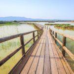 El Parque Natural El Hondo, un precioso paseo sobre pasarelas de madera