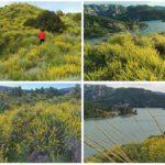 El mirador de la Peña Perico y los grandes campos silvestres de albaidas