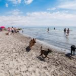 Una de las mejores playas para perros de España está en la Comunidad Valenciana