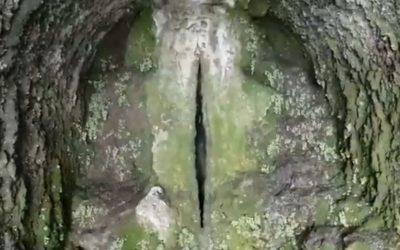 """La Cueva del """"Chocho"""""""