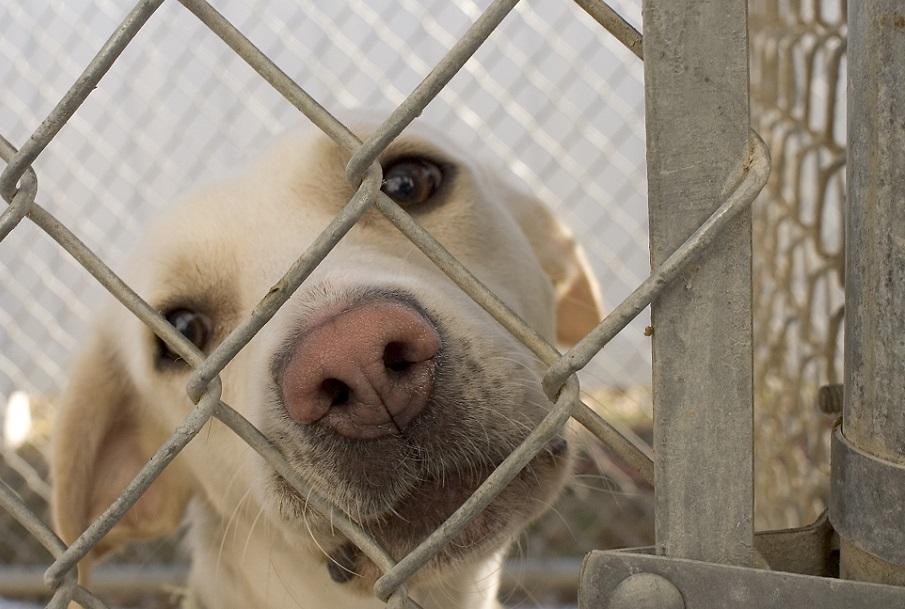 Los municipios valencianos podrán cobrar una tasa por tener mascotas