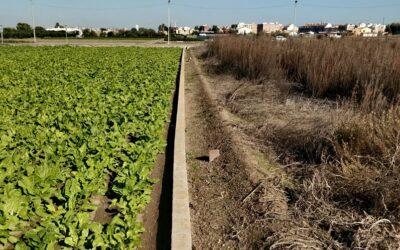 El Ayuntamiento de Valencia sancionará a los agricultores que abandonen sus campos
